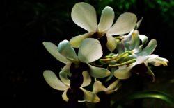 Memotret Bunga : Tidak Semudah Yang Dibayangkan