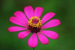 Komposisi Warna Untuk Menjadikan Foto Menarik