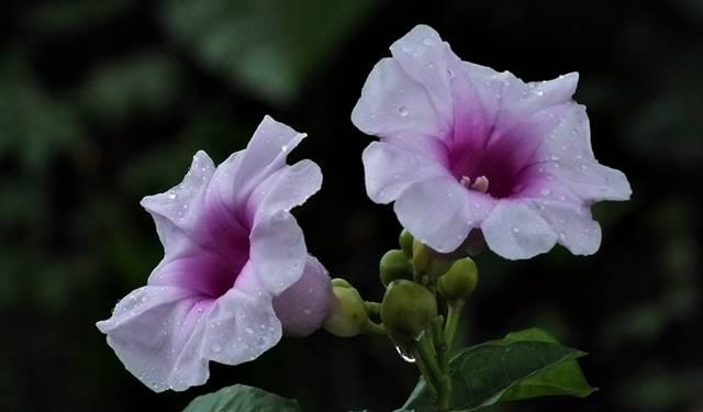 Membuat foto bunga langkah awal yang bagus untuk belajar fotografi 3
