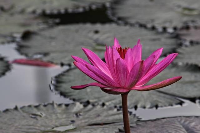 Membuat foto bunga langkah awal yang bagus untuk belajar fotografi