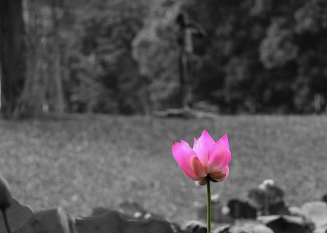 cara membuat efek selective color dengan GIMP AA1