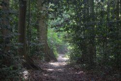 Tips #002 : Tes Jepret Untuk Memahami Lokasi Pemotretan