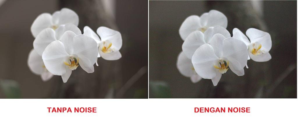 Mengenal Istilah Noise Dalam Fotografi