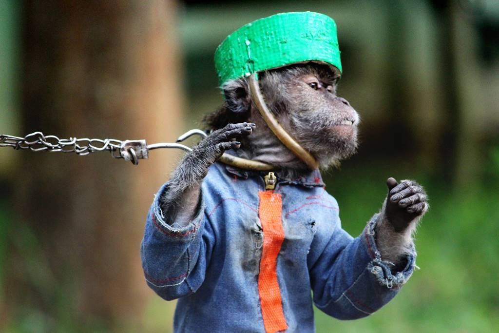 topeng monyet di Bogor